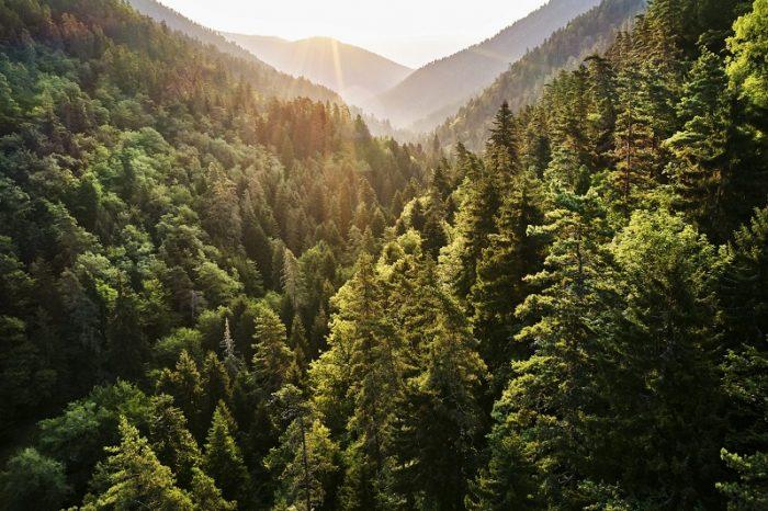 """Çevresel sürdürülebilirlik iddiasını büyüten Microsoft'tan yeni hedef: """"2030 itibarıyla sıfır atık!"""""""